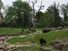 20130516_zoo-besuch-12