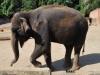zoo-elefant_0