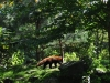 k-014.08.2012_Zoo-12