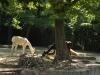 k-014.08.2012_Zoo-25
