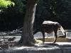 k-014.08.2012_Zoo-30