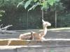 k-014.08.2012_Zoo-33