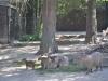 k-014.08.2012_Zoo-35