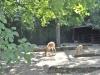 k-014.08.2012_Zoo-37