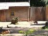 k-014.08.2012_Zoo-38