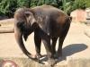 k-014.08.2012_Zoo-39