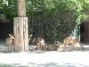 k-014.08.2012_Zoo-45