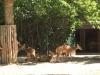 k-014.08.2012_Zoo-46