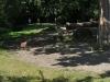 k-014.08.2012_Zoo-48